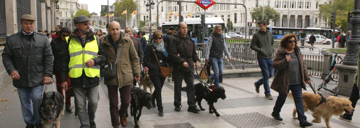 Imagen de una edición anterior del Paseo con Perros Guía por Madrid - ONCE